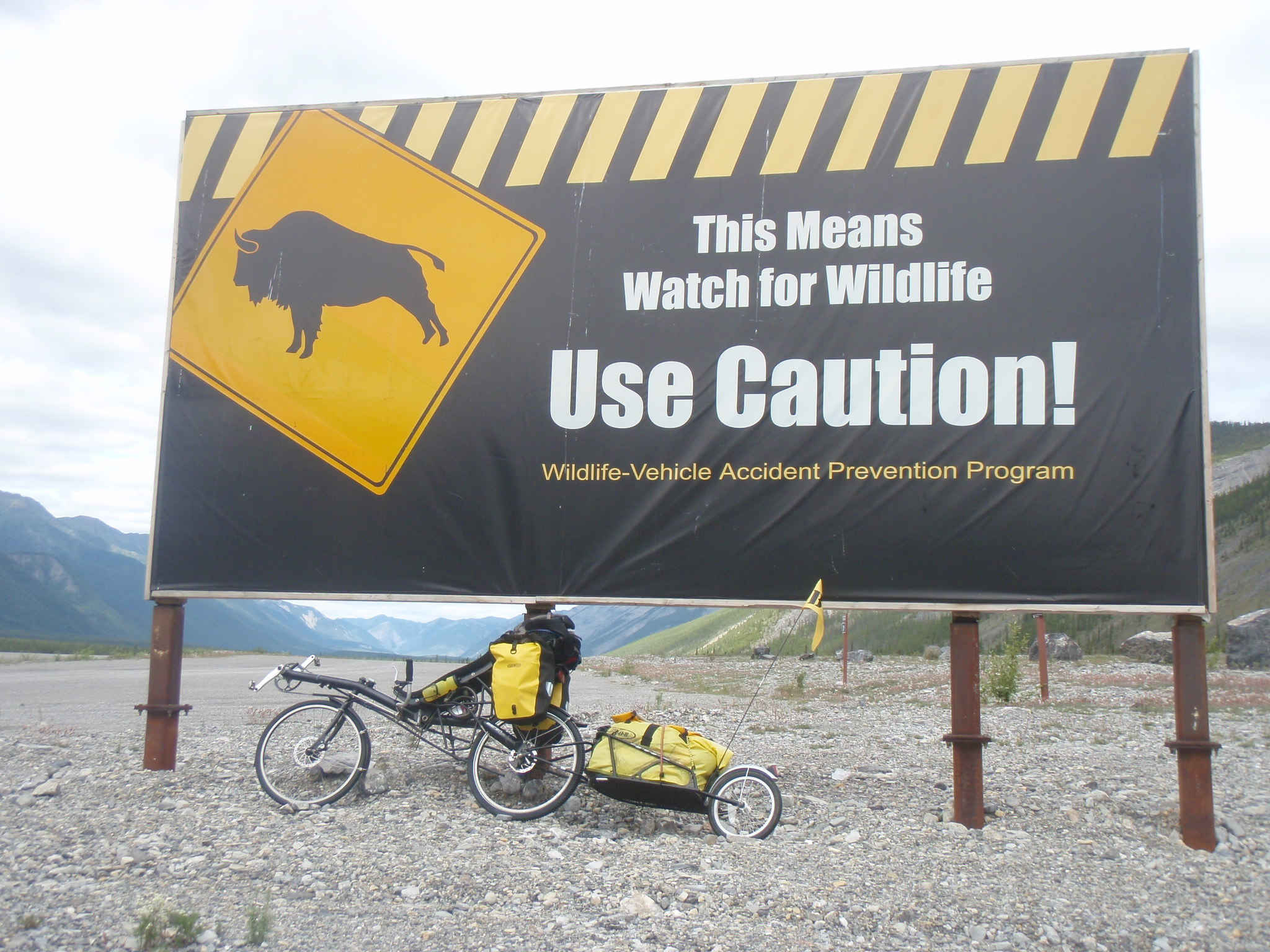 Wildlife is a real traffic hazard up here - including wild recumbents