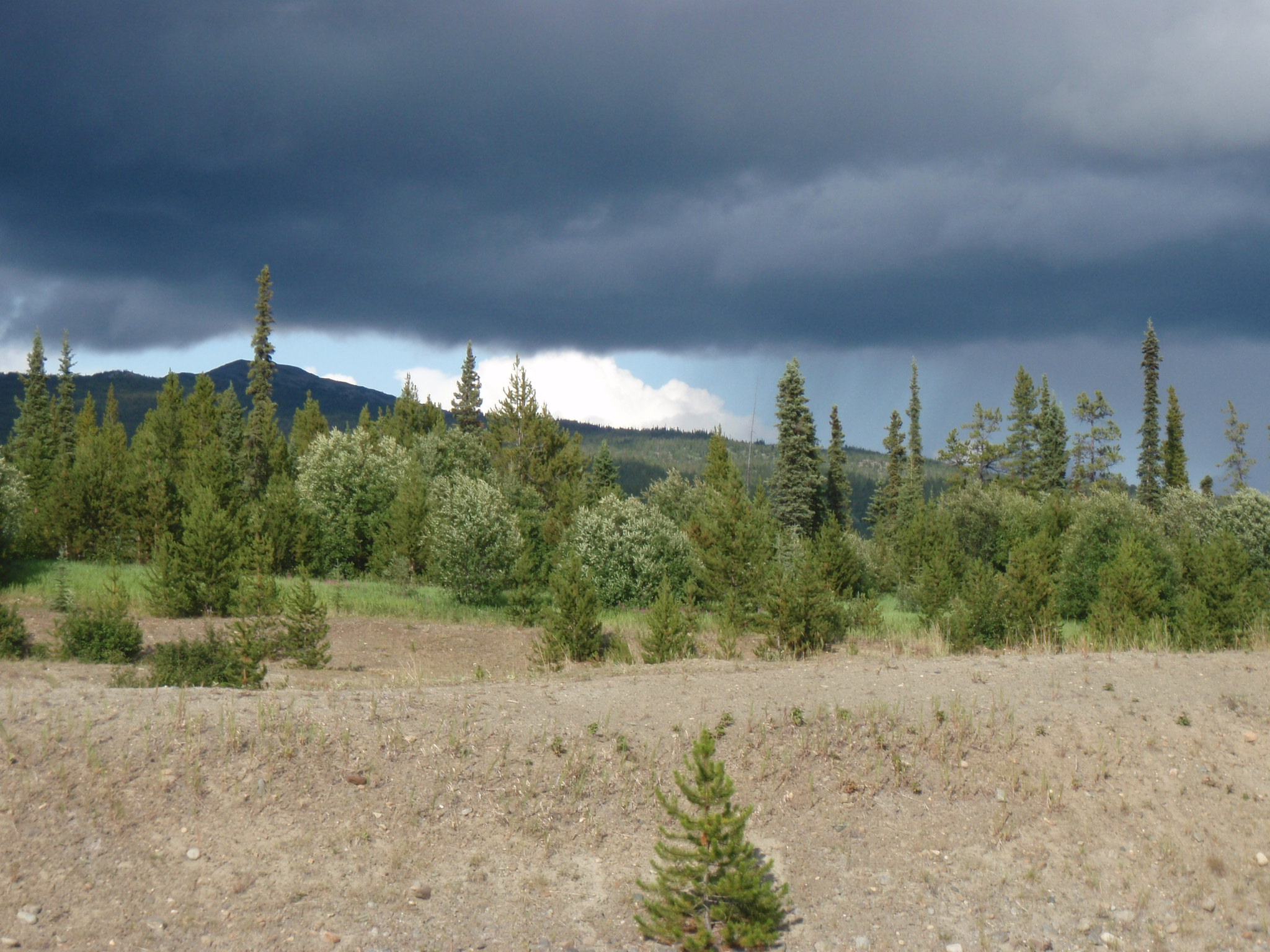 Patches of dark clouds and sunlight over British Columbia forest