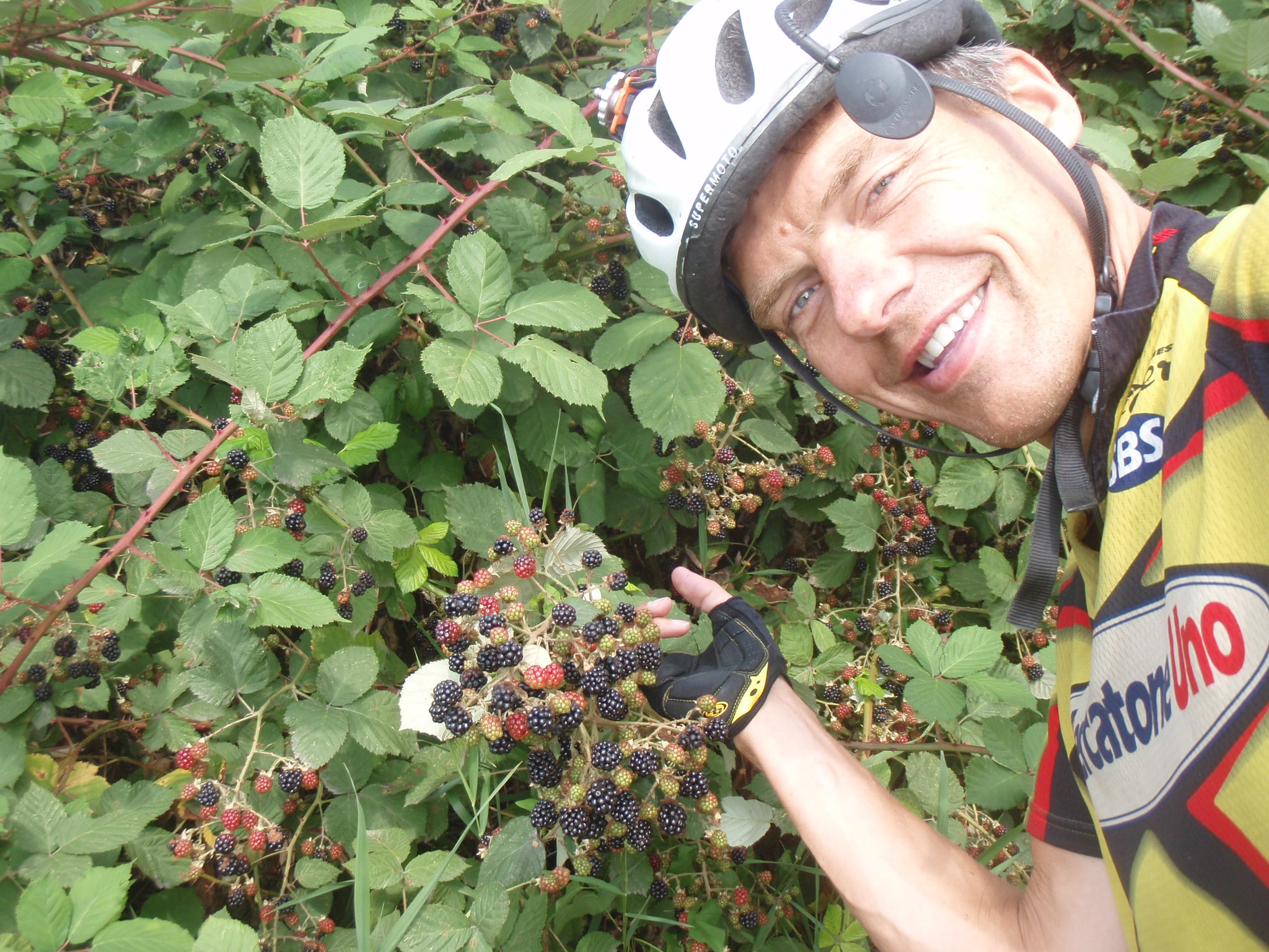 Sweet blackberries ripe for the picking along rural roads