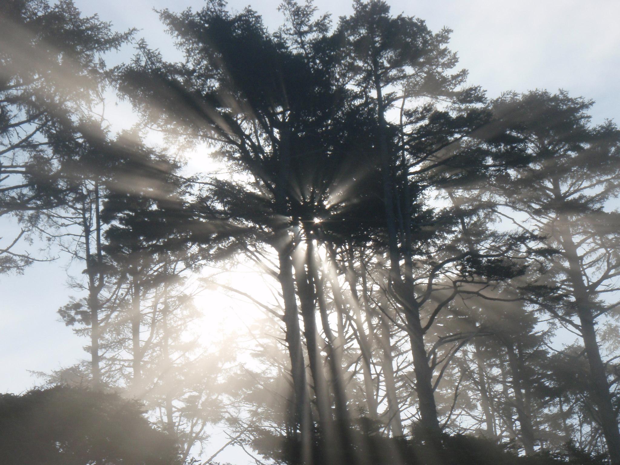 Morning rays of sun on Pacific Coastline in Washington State