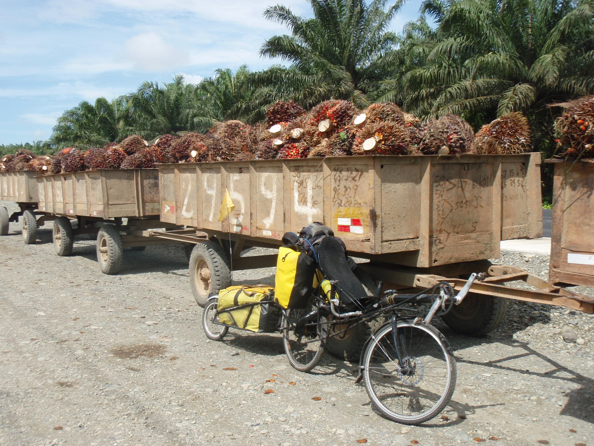 Truck loads of Palm Nuts headed for processing into Palm Oil