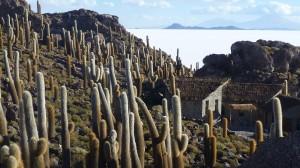 Isla Incahuasi on Salar de Uyuni