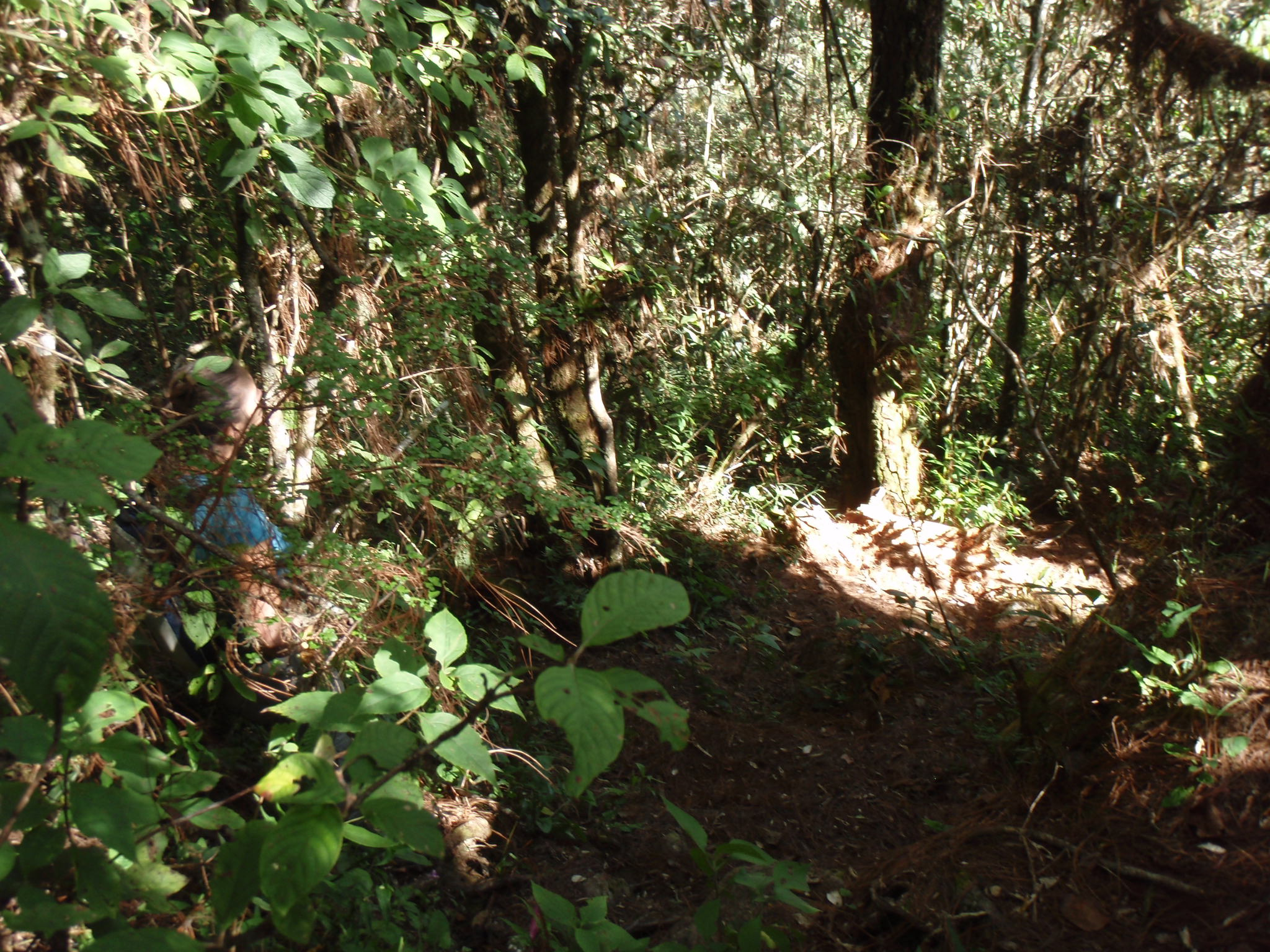 Steep trail leading up to Cerro Las Minas, high point of Honduras