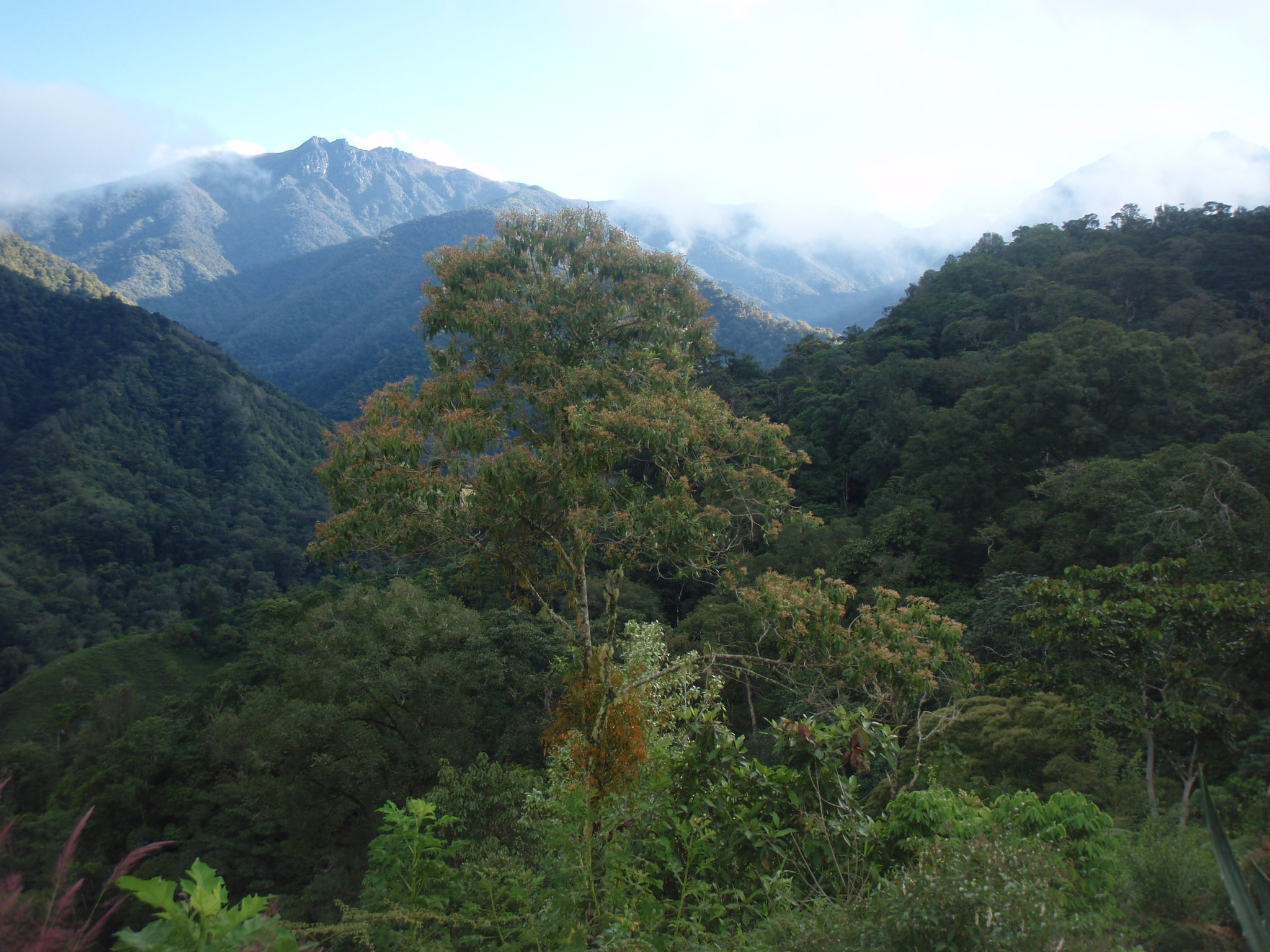 Climbing through the Chirripo cloud forest on Day 1